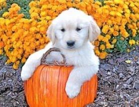 cute-halloween-dog