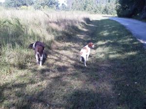 Trail walk at home