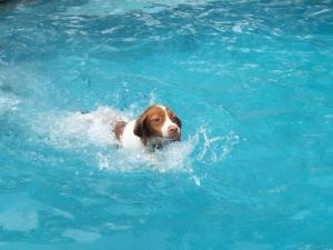 Daisy Mae gets her first swim in a pool.