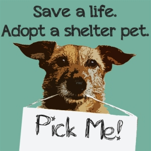 Adopt a Senior Pet this month.  You will never regret it.