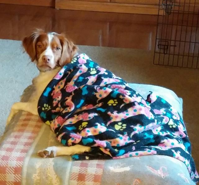 Daisy Mae Getting Warm in her Blankie