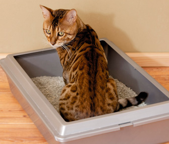 Cat gets comfortable in litter box