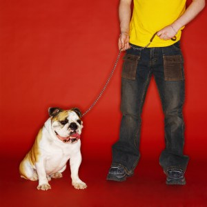 Low Section View of a Man with His Bulldog